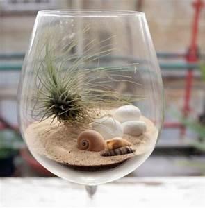 Tillandsien Im Glas : weinglas dekoideen tillandsien sand muscheln terrarium creativ weinglas dekoration und deko ~ Eleganceandgraceweddings.com Haus und Dekorationen