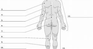 Unlabeled Diagrams Of The Human Body