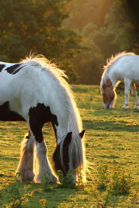 peaceful horse animals farms horses