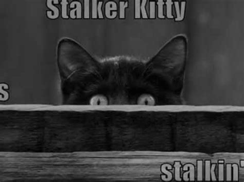 Lolcats In Haunted Revised Are Lol Cats Stalking You