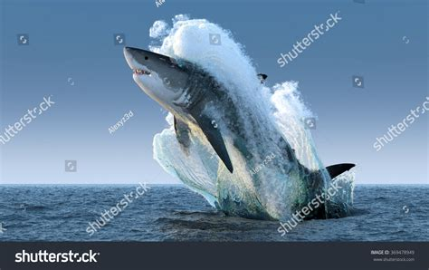 Great White Shark Jumping Out Of Water Wallpaper Shark Jumping Out Of Water