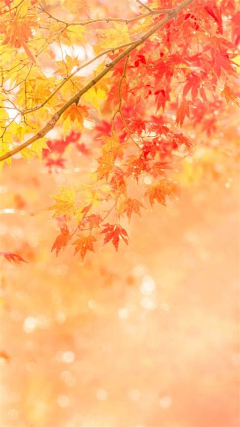 Autumn Wallpaper Iphone 8 Plus by 25 Gorgeous Fall Wallpaper Ideas On Fall