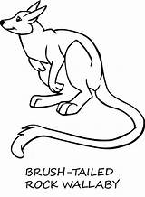 Wallaby Coloring Pages Animal Template Animals Designlooter Sheet Sketch 680px 59kb Rock sketch template