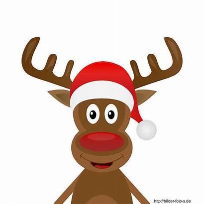 Weihnachten Rudolf Clipart Renifer Schach Reindeer Cliparts