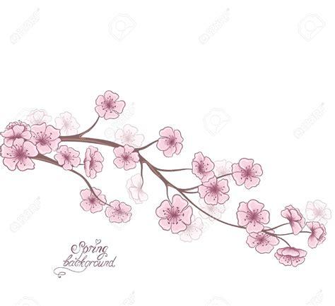 Branche Fleur De Cerisier Dessin Fleurs De Cerisier