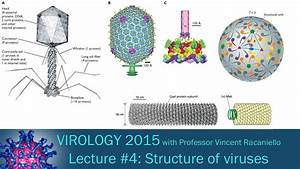 Virology 2015 Lecture  4  Structure Of Viruses