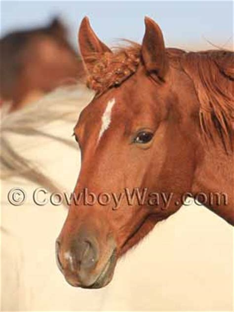 horse facial markings explained