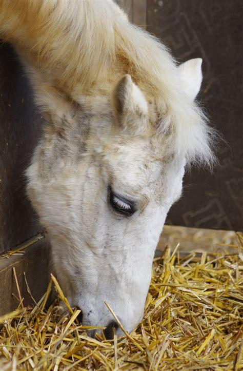 cushing syndrom beim pferd symptome behandlung kosten