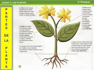 Cono tema 3 las plantas