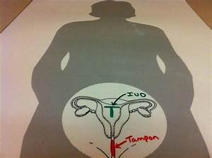 How To U0026 39 S Wiki 88  How To Use Tampons Diagram
