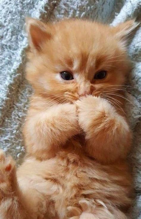 cute animal tumblr