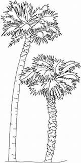 Florida Tree State Drawing Palm Coloring Sable Symbols Sketch Fcit Usf Edu Larger Credit sketch template
