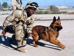 dogs in the military photos