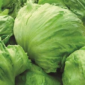 Lettuce Iceburg - Pohlmans - Phone 07 5462 0477
