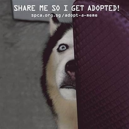 Meme Adopt Memes Adoption Spread Animals Surprised