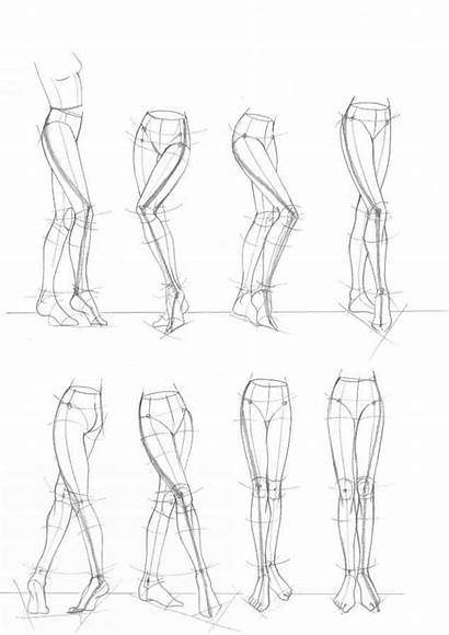 Drawing Figure Structure Female Proportions Proportion Perspective