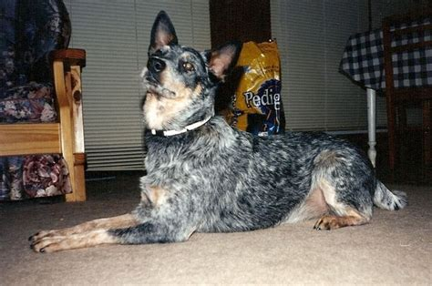 list   dogs breeds types  dogs