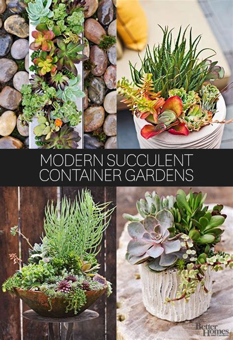 succulent containers succulents and container garden on