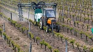 Traitement Contre L Oïdium : oidium vigne soufre viticulture biologique fongicide ~ Dallasstarsshop.com Idées de Décoration