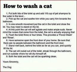 how to give a cat a bath how to wash a cat pictures quotes pics photos