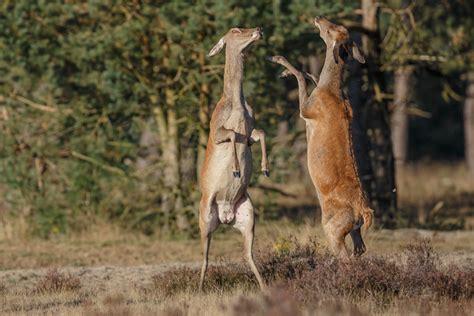 Zickenkrieg (Forum für Naturfotografen