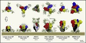 Common Features Of Enveloped Viruses And Implications For