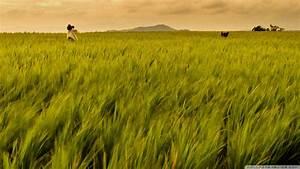 Download Rice Field Philippines Wallpaper 1920x1080 ...