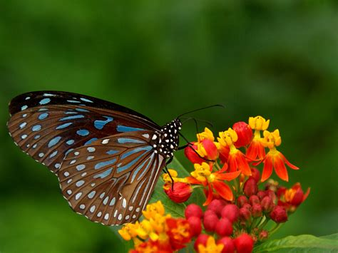 best flower pictures free hd wallpapers best hd butterflies and flowers wallpapers