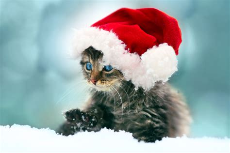 Very Cute Christmas Animals And A Competition  Alamy Blog