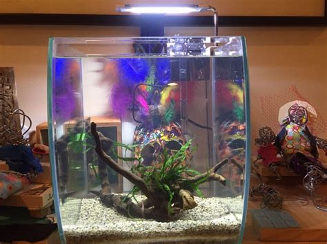 aquarium store yelp coral aquariums pet stores elmhurst jackson heights ny 2017 fish tank