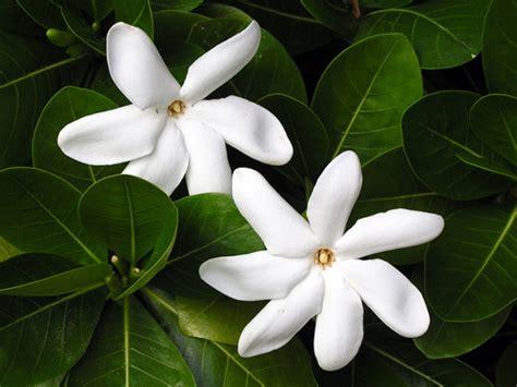 la journée du tiare the tahiti traveler