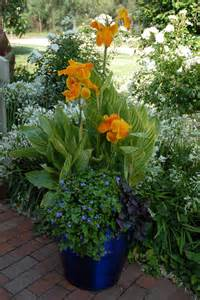 Container Garden with Canna