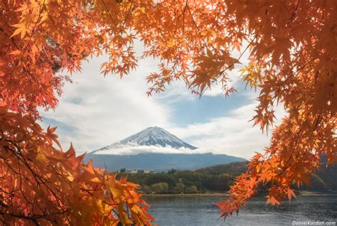 japan  red autumn leaves photo    november