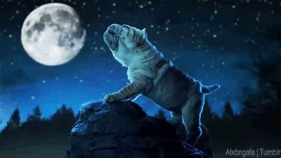 Moon Pei Shar Pedigree Gifs Howling Friday