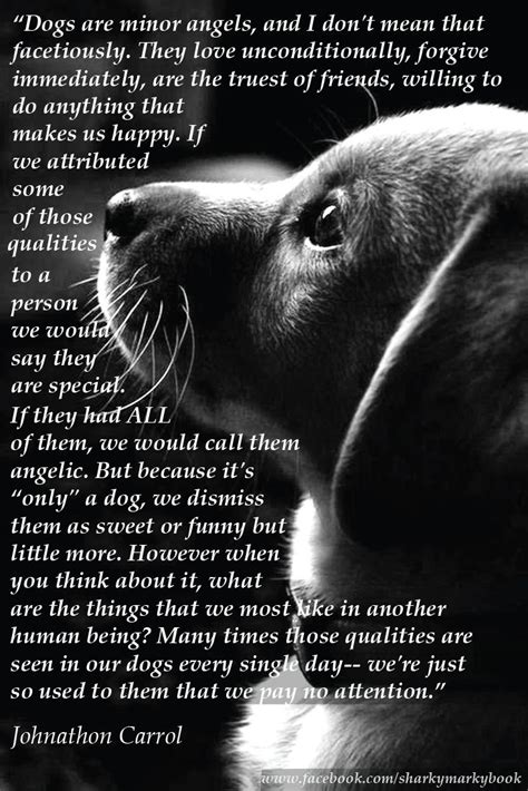 inspirational quote  dogs  carroll dogs  angels