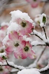 Blumen Im Winter : winter blumen winter pinterest winter blumen winter und blumen ~ Eleganceandgraceweddings.com Haus und Dekorationen