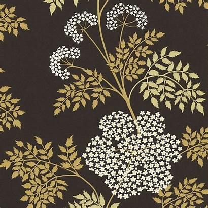 Sanderson Wallpapers Cowparsley Ebony Options Cow Parsley