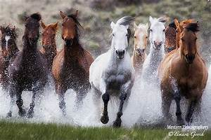 Ranch Horses Running Through Water Photo SRCC_8868 ...