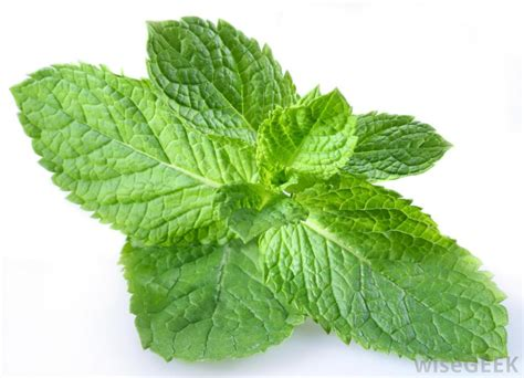 Does peppermint have heeling powers? | SiOWfa15: Science ...