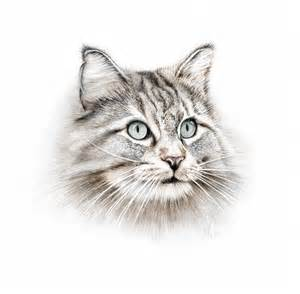 5 animal portraits lydia carline