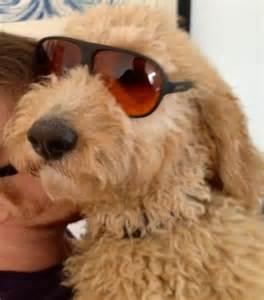 Cutest Golden Retriever Puppies Ever