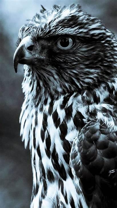 Hawk Mobile Phone Wallpapers Mb