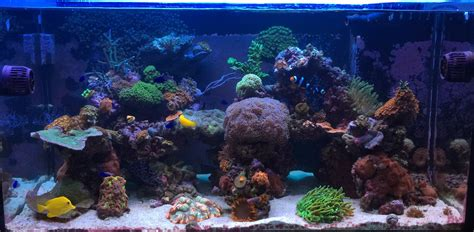 professional aquarium installation nj custom fish tank