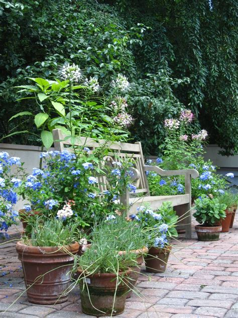 dovecote decor my container garden revisited