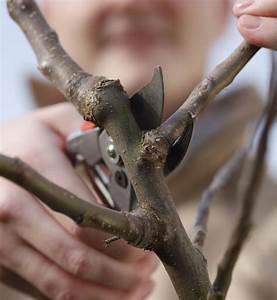 Apfelbaum Wann Schneiden : apfelbaum schneiden wassertriebe apfelbaum schneiden wann apfelbaum schneiden apfelbaum herbst ~ Frokenaadalensverden.com Haus und Dekorationen