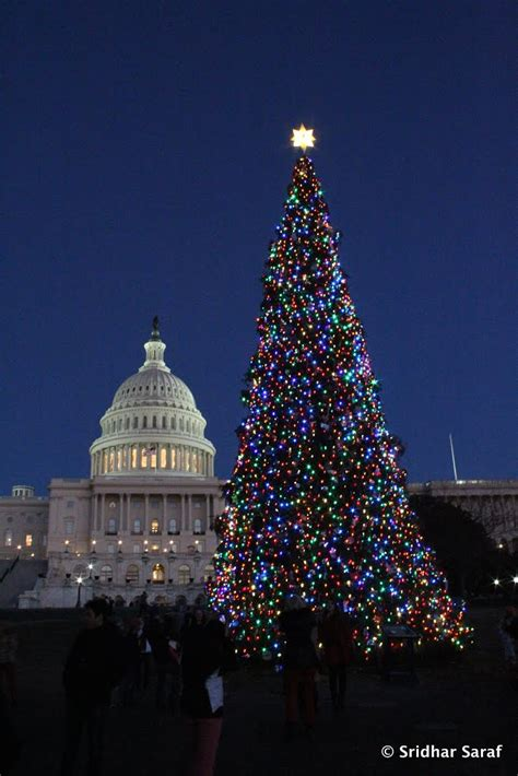 panoramio photo of capitol tree lighting