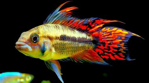 top  centerpiece fish   small  medium sized