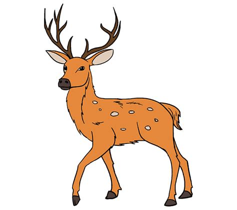 draw  deer    easy steps easy drawing guides