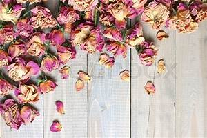 Pile of pink dried roses on gray rustic wooden background