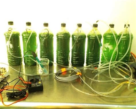 Kitchen Chemistry Experiments by Homemade Biodiesel From Algae Urdu Doscience
